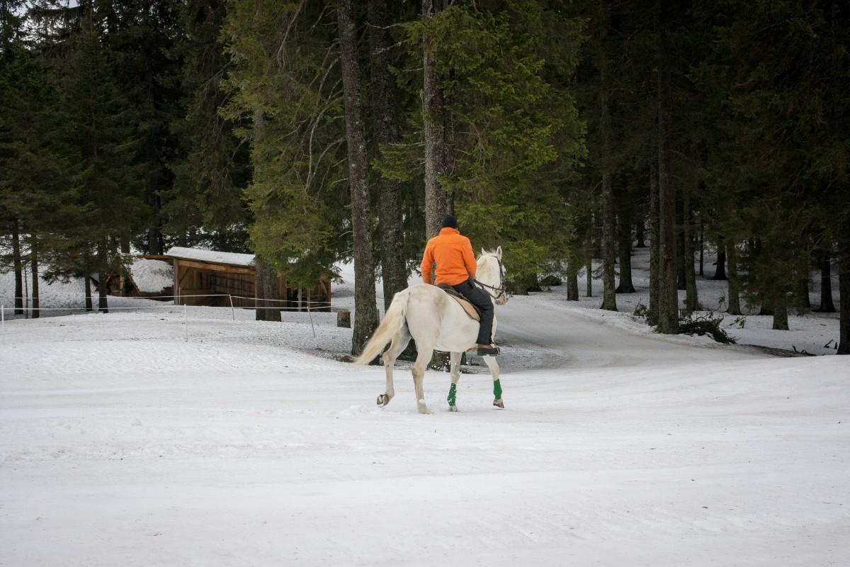 Skijoring in spoznavanje konj na Rogli