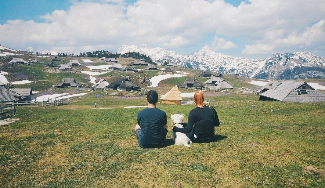 Med vijoličnimi žafrani na Veliki planini