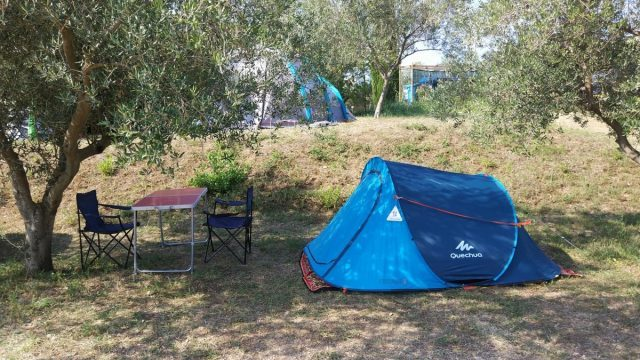 Camping between olive trees at campsite Belvedere