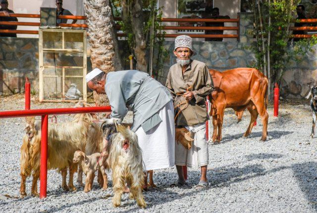 Načrt potovanja: 13-dnevni road trip po Omanu