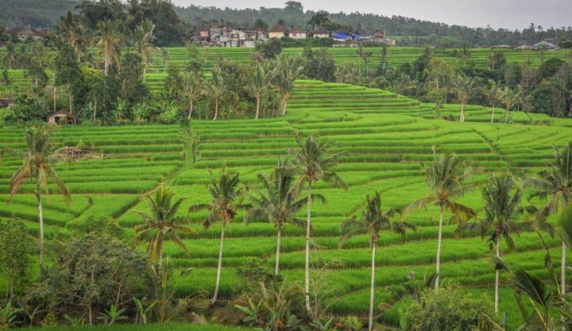 Potovanje na Bali: Vse kar morate vedeti