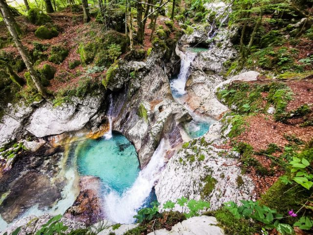 20+ ideas and activities on what to do in the Soča Valley: sunik water grove