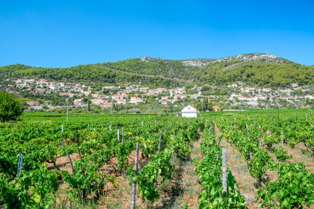 Vodič po Korčuli, otok morja, sonca in vina: korčula vino vinarne